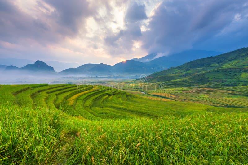 在越南风景米大阳台的早晨光  免版税库存照片