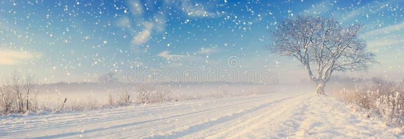 在越野偏僻的树在冬天 免版税图库摄影
