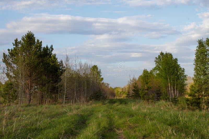 在距离的森林轨道在西伯利亚混杂的森林里 免版税库存图片