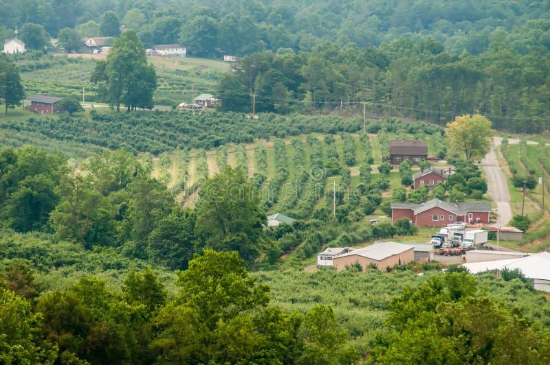 在距离的Vinyard弗吉尼亚山 免版税库存照片