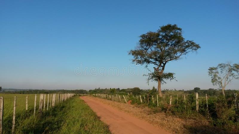 在路一边的树 库存照片