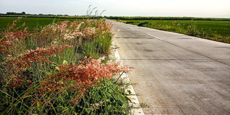 在路和米领域旁边的植物 免版税图库摄影