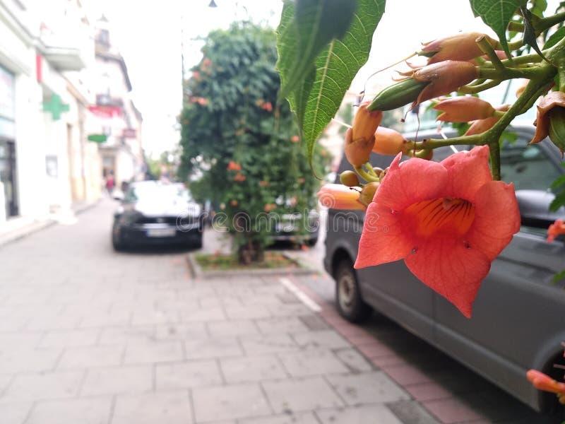 在路或停车场附近的开花植物 有花的布什,绿化城市,改进空气质量 车行道的装饰 免版税库存照片