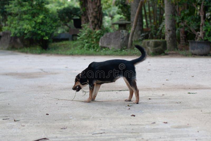 在路旁玩耍的狗 免版税库存图片