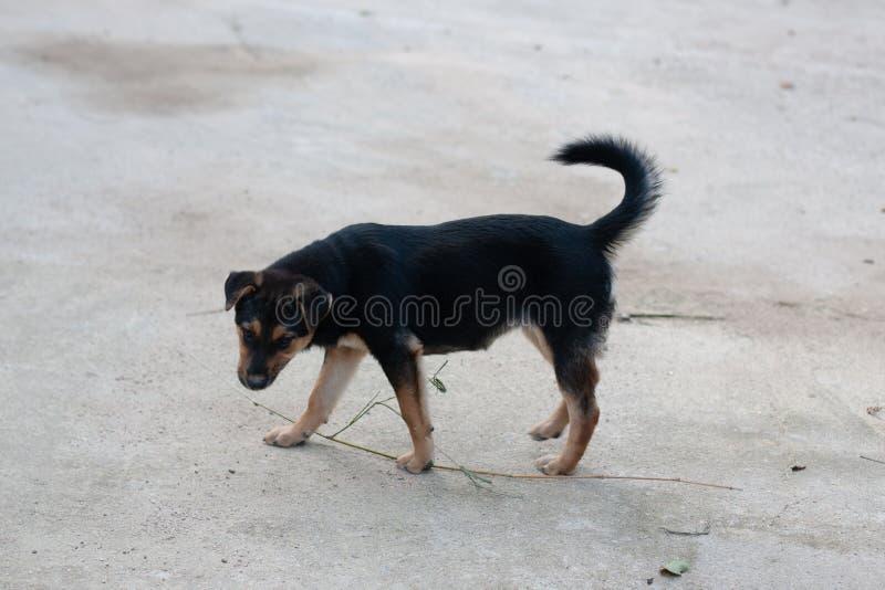 在路旁玩耍的狗 库存照片