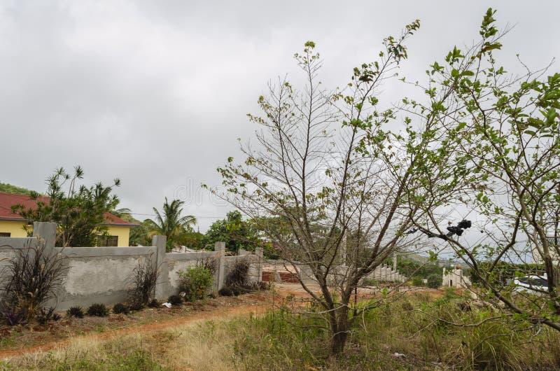 在路旁的天旱受影响的Starapple树 库存图片