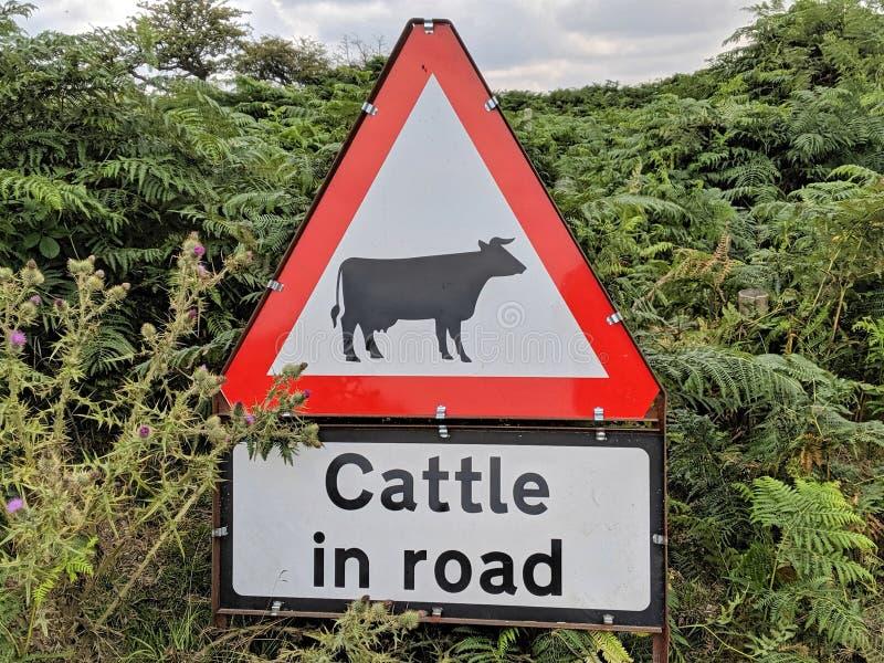 在路标的牛 免版税图库摄影