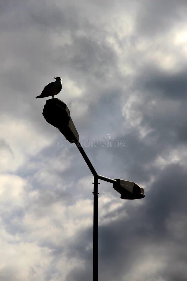 在路灯柱栖息的海鸥 免版税库存图片