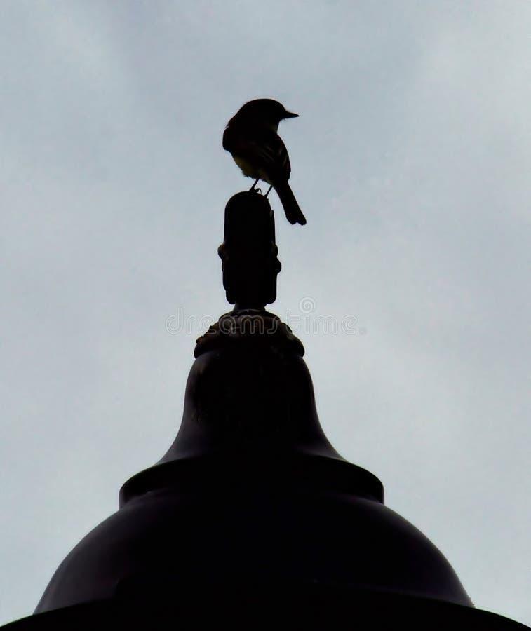 在路灯柱顶部的鸟 库存照片