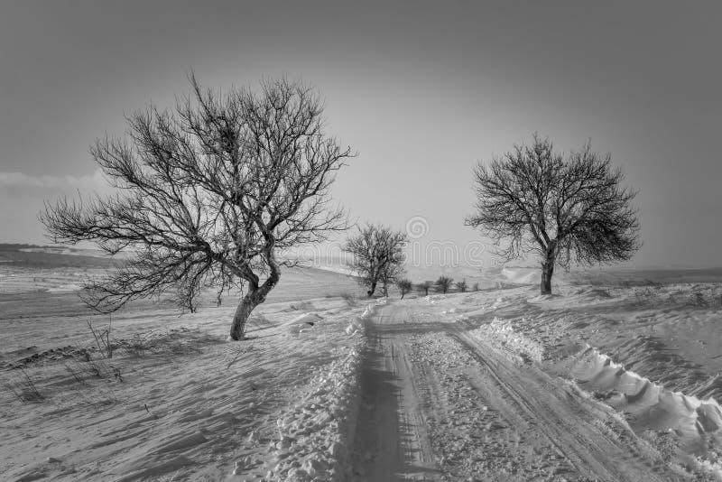 在路的冬天 免版税库存图片