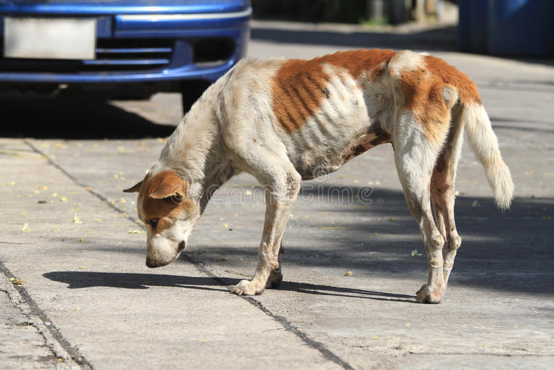在路的无家可归的狗 免版税库存照片