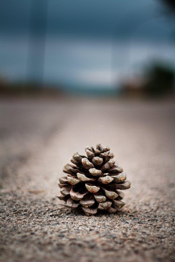 在路的杉木锥体 免版税库存图片