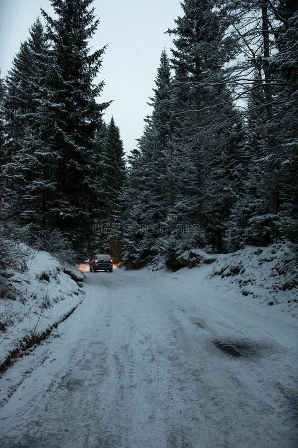 在路的汽车在冬天森林里 库存照片