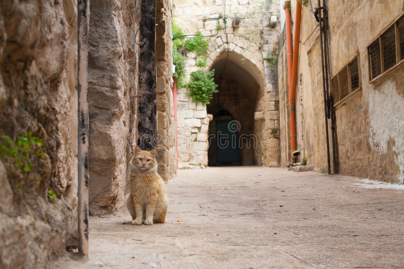 在路的猫在纳布卢斯以色列石头路曲拱背景中 免版税库存图片