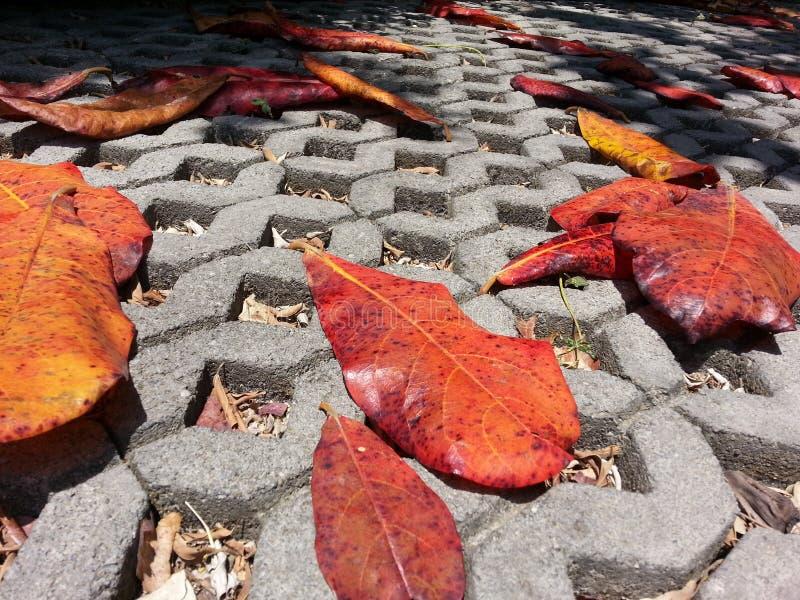 在路的红色死者叶子 库存照片