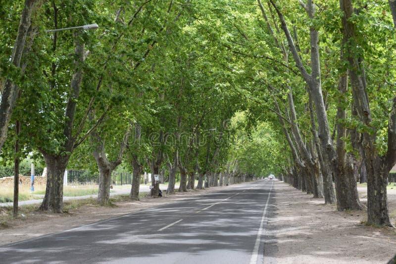 在路的结构树 库存图片