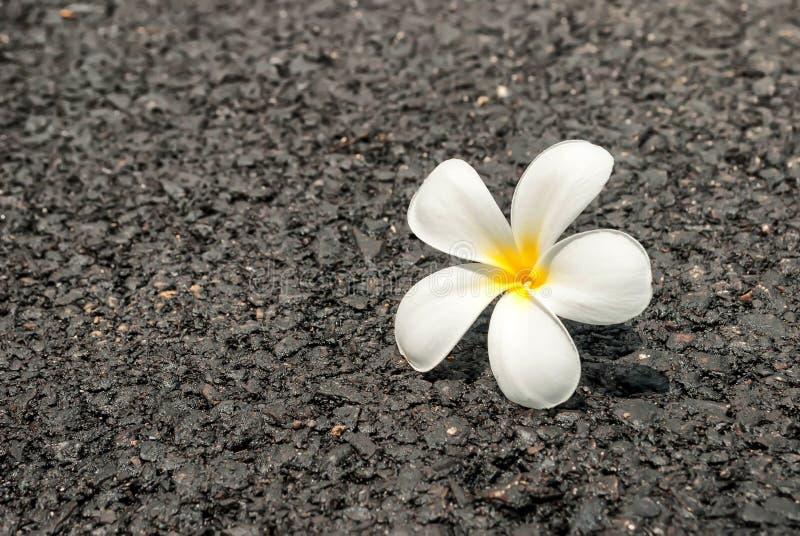 在路的美丽的白花 免版税库存图片