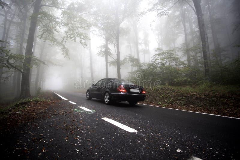 在路的雾 免版税图库摄影