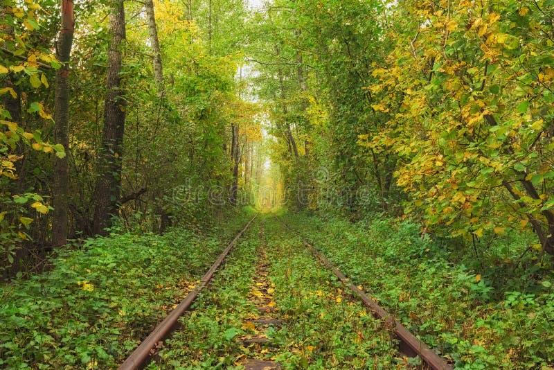 在路轨附近的一本残破的日志 在爱秋天森林著名隧道的一条铁路由树形成了 Klevan, Rivnenska obl 乌克兰 库存照片