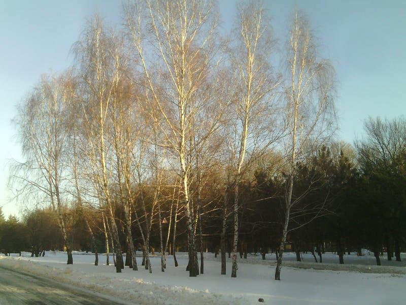 在路附近的树 免版税库存图片