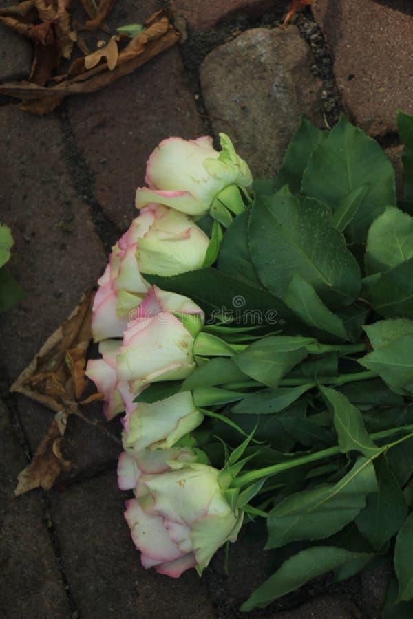 在路面的桃红色玫瑰 图库摄影