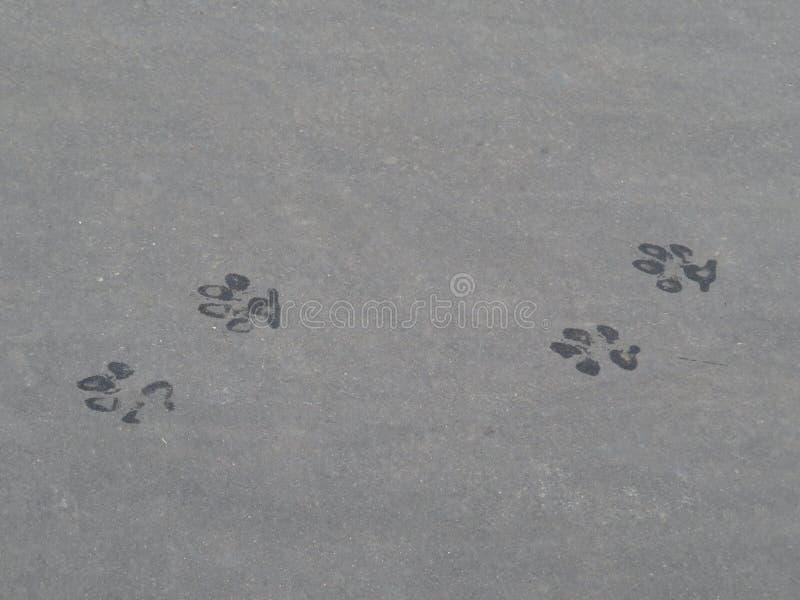 在路面的湿狗印刷品 免版税库存图片
