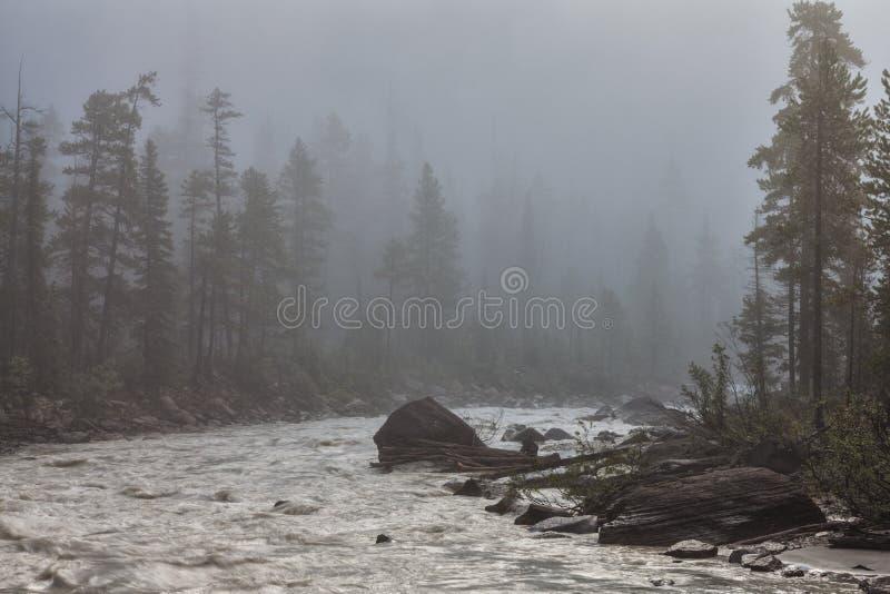 在踢的马的有薄雾的早晨劈裂 库存图片
