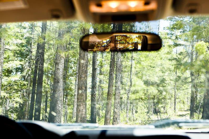 在车辆驾驶通过森林里面 库存图片