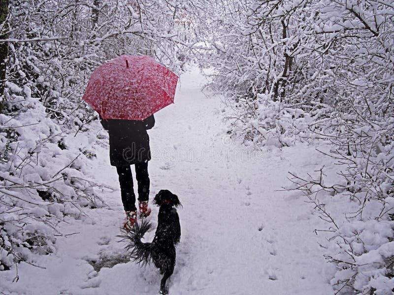 有狗的妇女在雪landscaspe -冬天场面 免版税库存照片