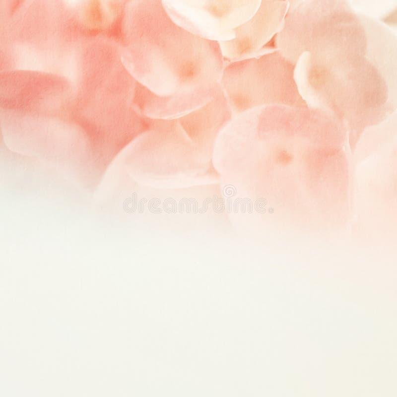 在软性和迷离样式的甜花在桑树纸纹理 库存照片