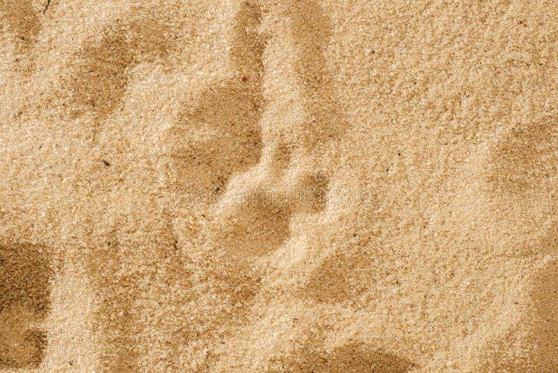 在软的沙子的一个猫` s脚印 图库摄影