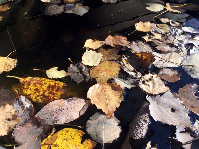 在软的温暖的颜色的美丽的静物画与在不感动人的水表面顶视图的落叶 免版税库存照片