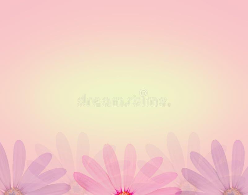 在软的甜颜色的雏菊花和迷离称呼纹理背景 皇族释放例证