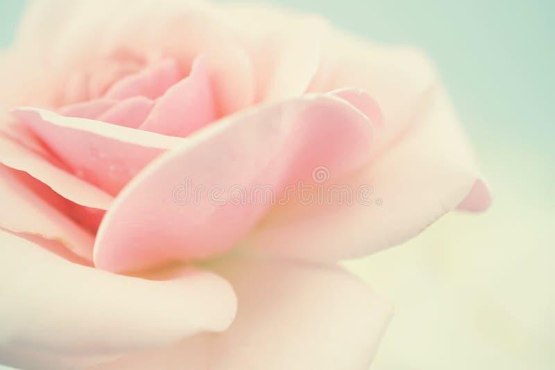 在软的颜色和迷离样式的甜桃红色玫瑰 库存图片