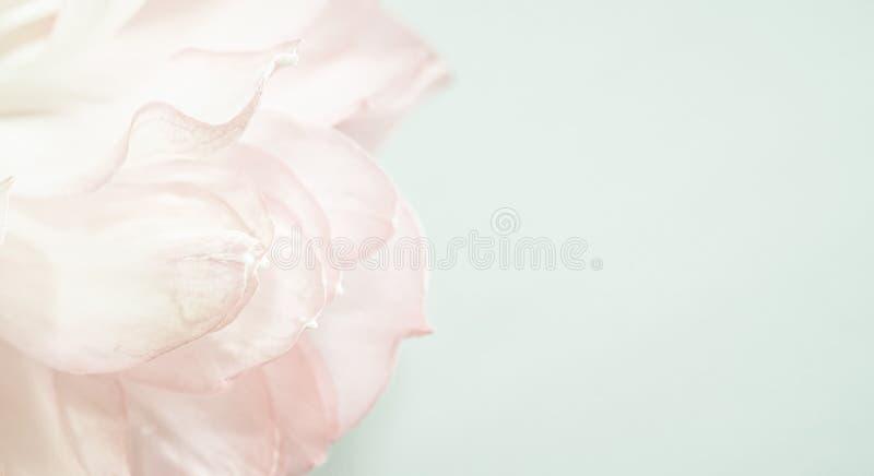 在软的颜色和迷离样式的甜颜色莲花瓣 免版税库存照片