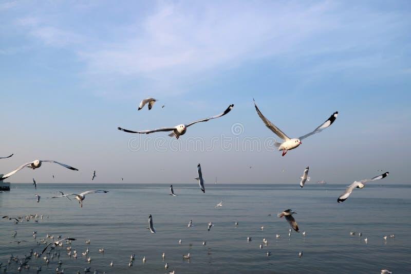 在轰隆Pu海滩,泰国海的无数狂放的海鸥飞行  库存照片