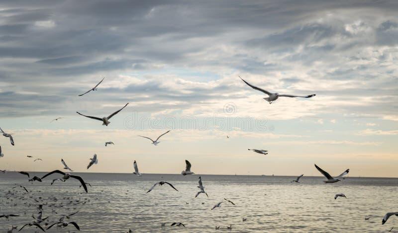 在轰隆pu的海鸥鸟 免版税库存照片