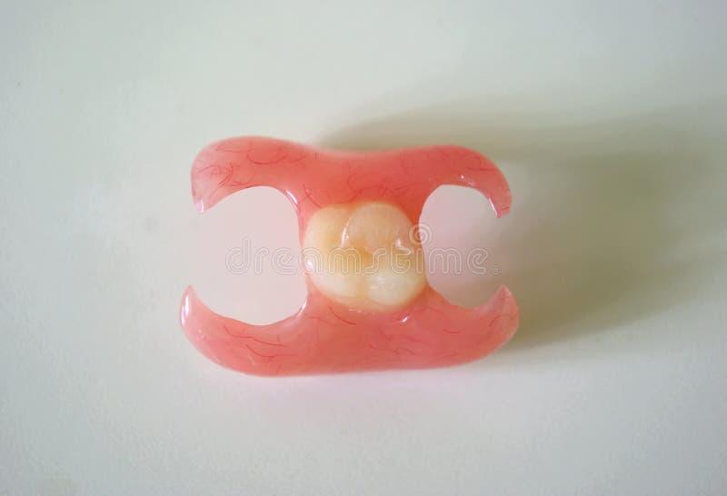在轻的背景的假牙蝴蝶 库存照片
