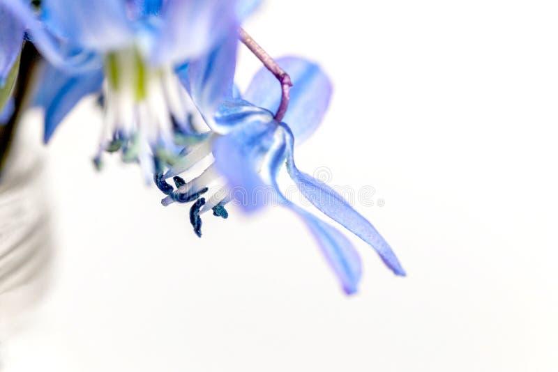 在轻的背景的第一春天蓝色花 库存照片