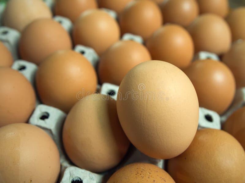 在载纸盘的许多鸡蛋 免版税库存图片