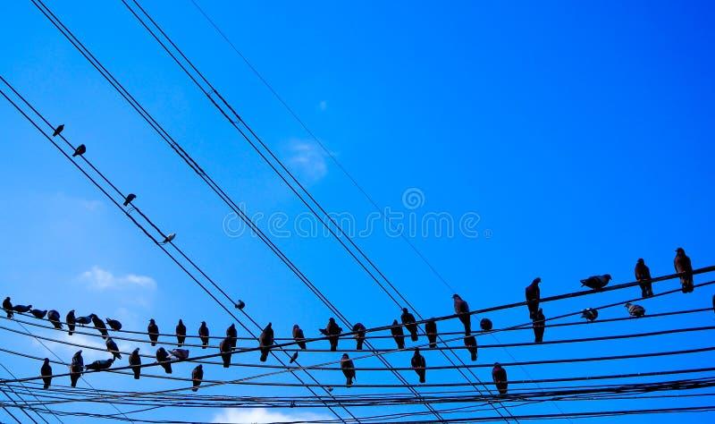 在输电线导线的鸟反对与云彩背景葡萄酒减速火箭的instagram过滤器的天空蔚蓝 库存图片
