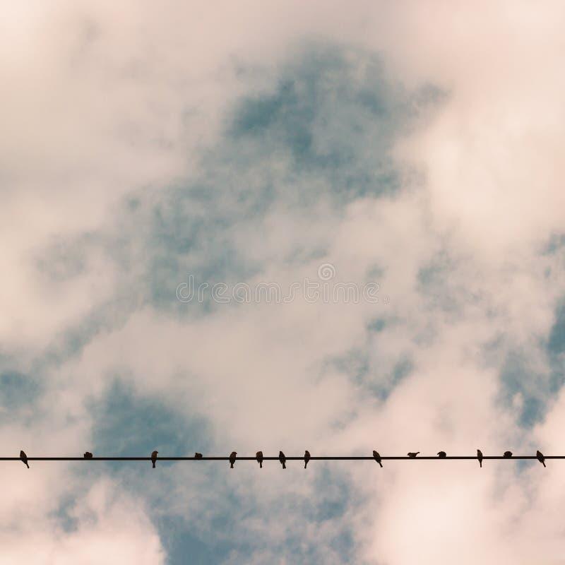 在输电线导线的鸟反对蓝天 库存照片