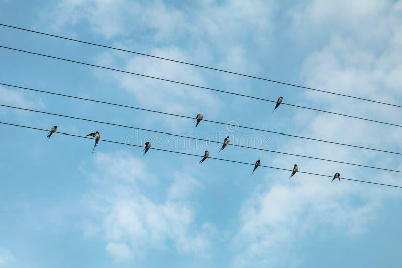 在输电线的燕子鸟 免版税库存图片