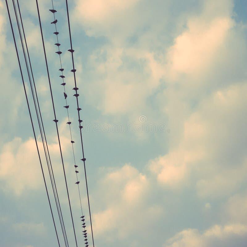 在输电线的鸟缚住反对与云彩backgroun的蓝天 免版税图库摄影