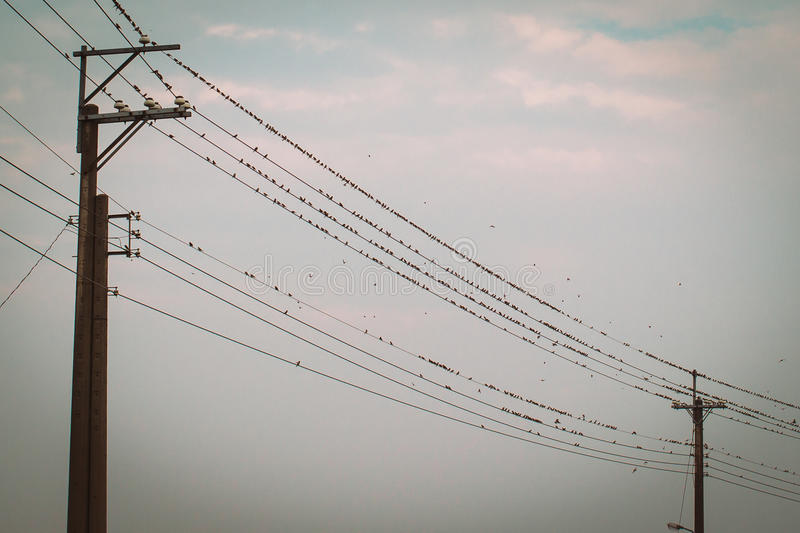 在输电线缆绳的鸟 免版税库存图片