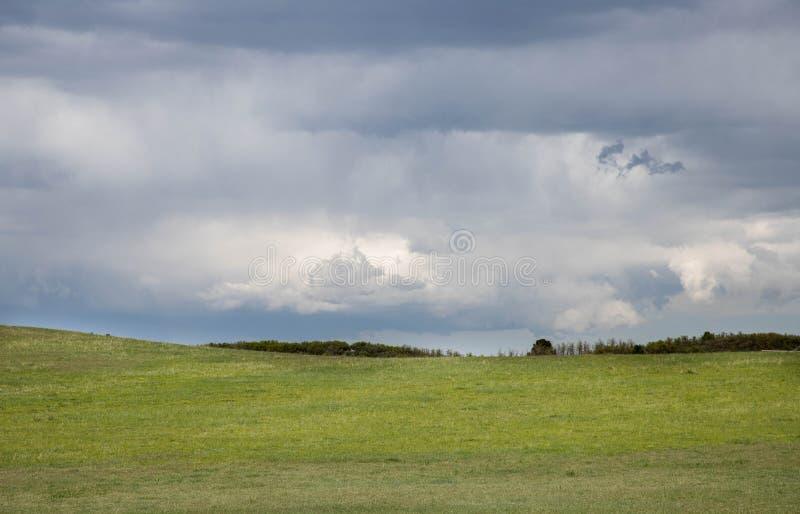 在辗压的黑暗的暴风云绿化牧场地 免版税库存图片