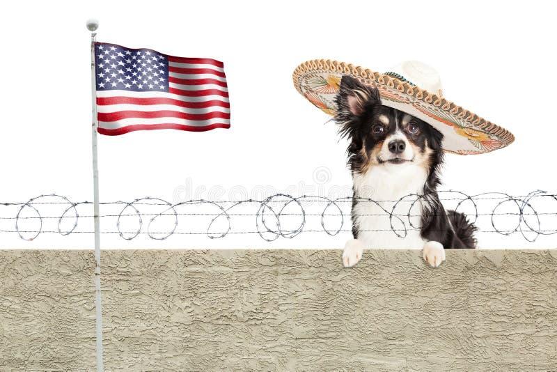 在边界篱芭的墨西哥奇瓦瓦狗狗 图库摄影
