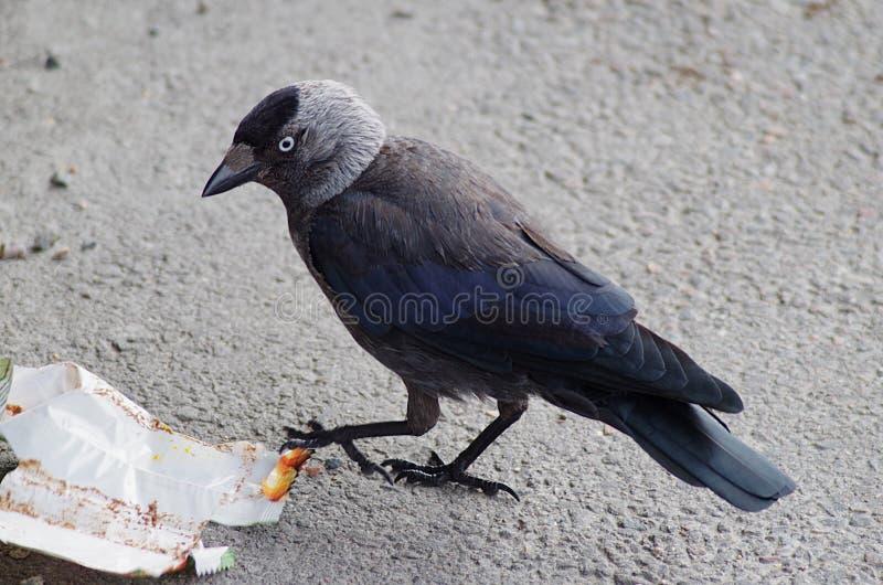 在边路的一只鸟 图库摄影