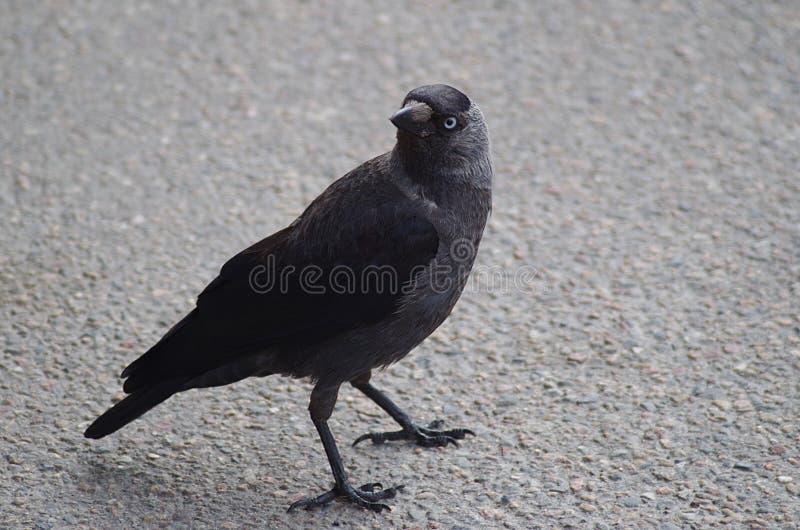 在边路的一只鸟 免版税库存图片