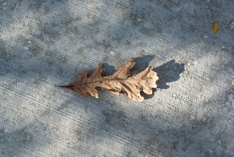 在边路的干燥橡木叶子 免版税库存照片